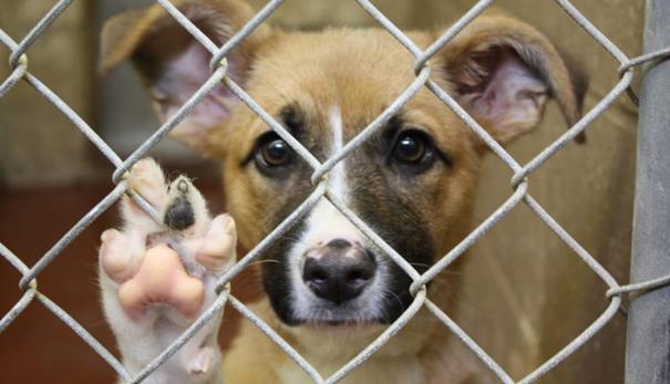 Zbiórka karmy dla psów i kotów ze schroniska w Krośnie